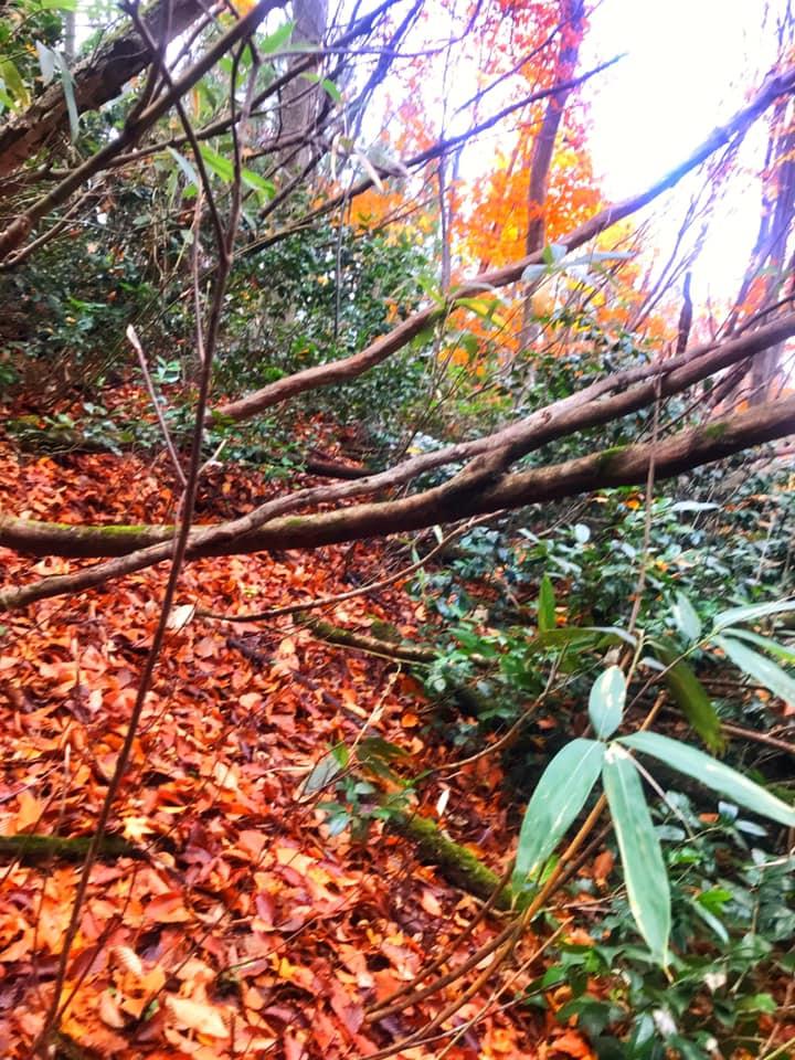 ここは藪浅いところだけどこんな感じで横向きに気が生えてます。藪のクセ強すぎ!